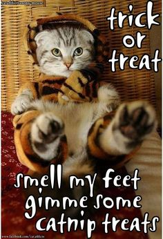 ☆ Trick or treat, smell my feet, give me some catnip treats. ☆                                                                                                                                                                                 More