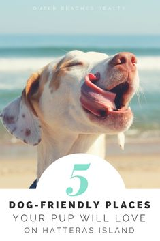 Five Dog-Friendly Places on Hatteras Island Your Pup Will Love   Outer Beaches Realty   Outer Banks, NC #Petfriendly #OBRblog #OuterBeaches #HIflyer #Pets #Dogs #Dogfriendly