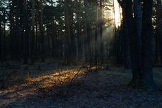 "https://flic.kr/p/EbzeWG   Landscape. Morning in spring forest. ""Golden ray of sunshine ..."""