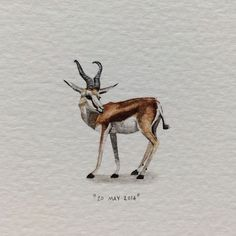 """Lorraine Loots: Postcards for Ants"""" Detailed Paintings, Mini Paintings, Watercolor Paintings, Miniature Paintings, Watercolours, South Africa Tours, African Colors, Colored Pencil Artwork, National Animal"""