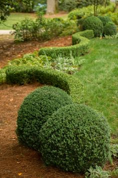 In Good Taste: Bellwether Landscape Architects - Design Chic Design Chic Boxwood Landscaping, Modern Landscaping, Beautiful Landscapes, Beautiful Gardens, Small Gardens, Modern Gardens, Pallets Garden, Garden Landscape Design, Contemporary Landscape