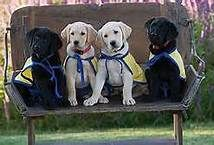 Canine Companions, Santa Rosa California - Bing Images