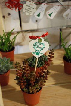 www.dreamgardens.ro//suculente, plante marturii evenimente, plante in ghivece, decoratiuni ghivece, aranjamente plante in ghivece, mini plante, ghivece colorate, ghivece metalice, galetuse ghivece, plante Craciun, Craciunite, decor iarna, decoratiuni masa Craciun.  //Christmas plants, suculents, christmas table decor, christmas arrangements, pot plants, plants favors, plants decor, coloured pots, mini plants, plant wedding favors, garden indoor, gardening, garden love, garden baskets.