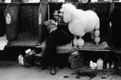 Tony Ray-Jones Dog owner with is clipped poodle at Crufts dog show, London, 1968 © SSPL/Getty Images