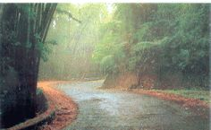 El Yunque Road