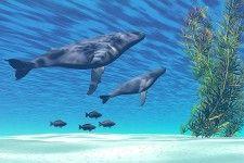 Animal & Wildlife Murals at MagicMurals.com