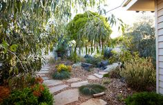 Phillip Johnson landscape design...A suburban wilderness inspiring children to roam and re-engage with nature. Jump along stepping-stones and explore secret paths to hidden pockets. This 630 square metre property is low maintenance and requires no irrigation. The soft permeable paths allow rainwater to percolate through to the sub-surface soil, and the use of bush mulch on garden beds further aids water retention.