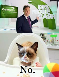Grumpy Cat doesn't want 50% more cash