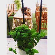 Plantas aromáticas y comestibles... a cocinar!! Objects, Beautiful, Instagram, Cook, Plants