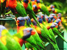 Birds are most beautiful creature of nature. In this collection you will watch 37 photos of most beautiful birds in the world which are looking like heavenly birds Most Beautiful Birds, Pretty Birds, All Birds, Love Birds, Colorful Birds, Colorful Parrots, Bird Watching, Bird Feathers, Beautiful Creatures