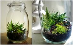 Creative Tuesday ~ DIY Glass Jar Terrarium