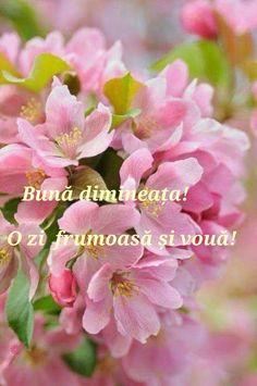 Plants, Quotes, Quotations, Dating, Planters, Qoutes, Plant, Quote