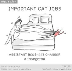 IMPORTANT CAT JOBS: ASSISTANT BED-SHEET CHANGER & INSPECTOR