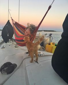 Meet Captain Ahab - Our New Sailor Cat Who Will Sail Around the World With Us Captain Ahab, Do I Wanna Know, Living On A Boat, Adventure Cat, Blonde Boys, Cat Names, Island Life, Dream Life, Cats And Kittens