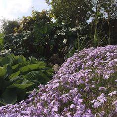 #garden @home #flowers
