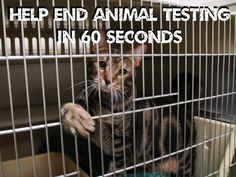 Help END Animal Testing by signing these petitions! See what you can do here: http://features.peta.org/stop-animal-testing/