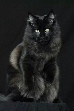 One of the most stunning cats I've ever seen! http://kittens.press/