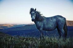 #equestrian #horselover