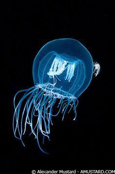 Light ball/b? Jellyfish