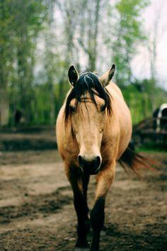 Horse's are amazing