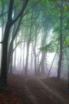 The road to cleansing mind byJanek Sedlář