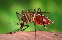 Repelentes naturales de mosquitos