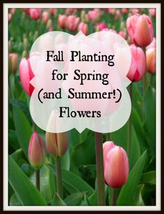 Fall Planting for Spring (and Summer!) Flowers