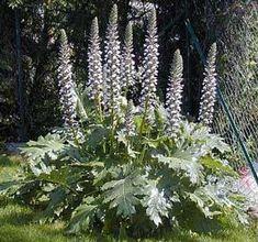 Mooie plant voor de tuin