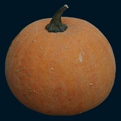 Baker Creek Heirloom Seeds- Winter Luxury Pie Pumpkin