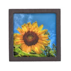 Choose from a variety of Sunflower gift boxes on Zazzle. Our keepsake boxes are great places to hold valuables like jewelry. Tiles For Sale, Plates For Sale, Sunflower Gifts, Sunflower Print, Gift Boxes For Sale, Printed Napkins, My Plate, Pillow Sale, Keepsake Boxes