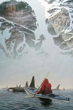 Kayaking with Orcas at Orcas Cove, Ketchikan, Alaska.