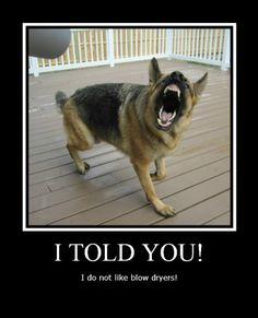 funny german shepherd pictures with captions | Location: Near Atlantic City, NJ