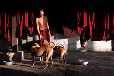 https://flic.kr/p/KXWjHv | Light. Yangon, Myanmar | Buddhist monk playing with two dogs in a monastery of Yangon, Myanmar (Burma).  Archive website  | Google+  |  Blog | Tumblr | Twitter | Pinterest   Fine Art prints, Posters and More Available Here   Join me on Facebook and Instagram