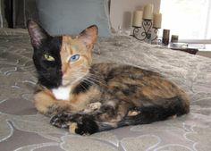 gorgeous cat <3 <3 <3
