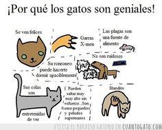 ¡Por qué los gatos son geniales!