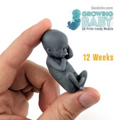Wachsende druckfertige für Babys About A series of 9 unique printed models for enriching your pregnancy experience! The largest model may be scaled up and printed for consecutive weeks of development. Accompanied by a guide document, which i Pregnancy Stages, First Pregnancy, Baby Size By Week, Fetus Size By Week, 9 Weeks Pregnant, 3d Modelle, Losing A Child, Experience Gifts, Midwifery