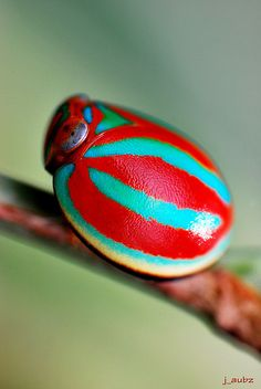 Colorful Beetle by j_aubz, via Flickr