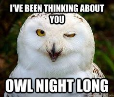 """77 """"Thinking of You"""" Memes - """"I've been thinking about you owl night long. Funny Animal Memes, Cat Memes, Funny Animals, Cute Animals, Funny Memes, Crazy Animals, Animal Puns, Animal Funnies, Funny Quotes"""