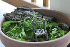 fairy garden with handmade fairy chair. love it. Need to make some chairs and a bench Mini Fairy Garden, Gnome Garden, Fairies Garden, Small Space Gardening, Small Gardens, Mini Gardens, Garden Inspiration, Garden Ideas, Garden Fun