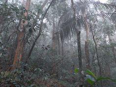 Fisionomia: Floresta Ombrófila Densa Submontana (entre 50 e 500m). Local: Duque de Caxias/RJ