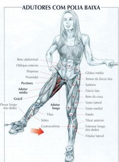dorso musculos exercícios - Google Search