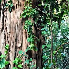 Look at the bark on this tree. Woodland Forest, Natural World, Make You Smile, Diorama, Garden, Nature, Plants, Garten, Naturaleza