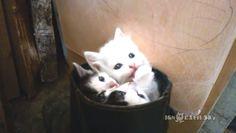 3匹の子猫がブーツに♪ぎゅうぎゅうに集まって遊ぶ姿がかわいすぎる♡