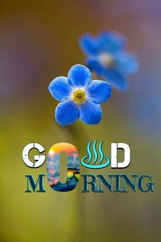Good Morning Thursday, Good Morning Cards, Morning Morning, Good Morning Picture, Good Morning Love, Good Morning Messages, Good Morning Wishes, Morning Coffee, Morning Quotes Images