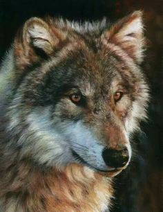 Wolf is a teacher and pathfinder of sacredness and spirituality. Wolf can teach us how to balance the responsibility of family needs while not to losing personal identity. Wolf also helps us to develop strength and confidence in our decisions and learn to Beautiful Creatures, Animals Beautiful, Cute Animals, Wolf Spirit, Spirit Animal, Wolf Pictures, Animal Pictures, Tier Wolf, Wolf Hybrid