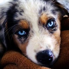 Ambiente: Those #eyes #... (adorable_animals) (link: http://ift.tt/2emeuqu )