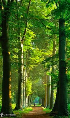 Beauty of summer in the Netherlands • photo: Lars van de Goor on 500px