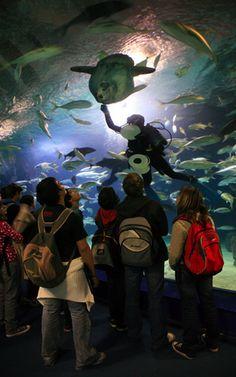Alimentando al pez luna Valencia, Santiago Calatrava, Spain, Science, City, Marine Ecosystem, Cities, Fish, Sevilla Spain