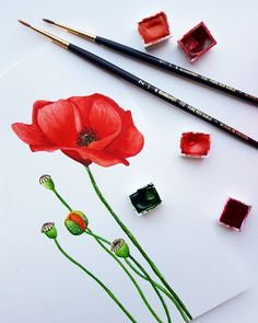 Poppy watercolor illustration by Studio Sonate Watercolor Illustration, Poppy, Hair Accessories, Studio, Prints, Hair Accessory, Studios, Poppies, Watercolour Illustration