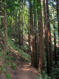 Learning from Our Predecessors' Vision. http://blog.savetheredwoods.org/category/forest/
